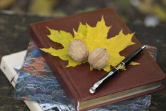 Notebook with yellow leaves and walnut . top view Stock Photos