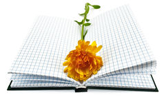 Notebook with yellow marigold Royalty Free Stock Photo