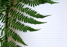 Notebook with yellow pencil and fern on white background. Stock Image