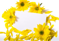 Notecard with Daises Royalty Free Stock Images