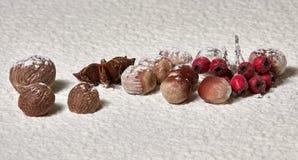 Notemuskaat, hazelnoten, steranijsplant, rode lijsterbessenbessen in de sneeuw Wi royalty-vrije stock afbeeldingen