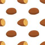 Notemuskaat, organische noot, gezond vegetarisch voedsel naadloos patroon Vector illustratie Royalty-vrije Stock Afbeelding