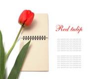 notepad czerwieni tulipan Fotografia Royalty Free