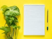 Notepad för anmärkningar, sidor för grön växt på det gula skrivbordet, lekmanna- lägenhet, kopieringsutrymme Royaltyfri Bild