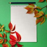 Notepad with foliage of wild grapes on a green background. Postcard. Autumn. Autumn background with wild grapes and a notepad. Place for text Royalty Free Stock Photography