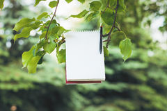 Notepad on green tree branch Royalty Free Stock Photo