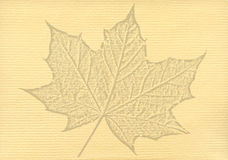 Notepaper document with a maple leaf watermark Stock Photos