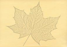 Notepaper dokument z liścia klonowego watermark Zdjęcia Stock