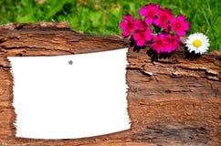 Notepaper på treestammen fotografering för bildbyråer