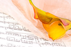 Notes with a beautiful flower Royalty Free Stock Photography