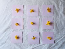 Notes on the bed. With yellow flowers stock image