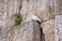 Notes at the crack of the Wailing Wall and a sparrow. Stock Photography