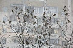 Notes de l'hiver Images libres de droits