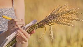 Notes femelles de tige et d'écriture de blé de prise de main Agro étude économique banque de vidéos