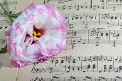 Notes and flower Stock Photography