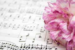 Notes and flower Royalty Free Stock Photos