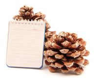 Notes pine cone Royalty Free Stock Photos