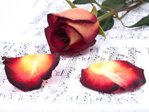 Notes and red rose Royalty Free Stock Image