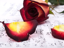 Notes and red rose Stock Photo