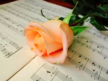 Notes and rose. Pink rose on the a music notebook Stock Photo