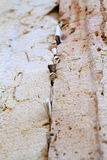 Notes to god western wall stones. Letters to god in stones of western wall jerusalem israel looking up royalty free illustration