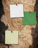 Notes on tree background Royalty Free Stock Images