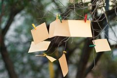 Notes on a tree branch, orange paper is hanging on the tree on the pinch stock photo