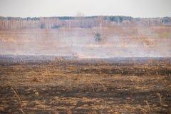 Notfall auf einem Gebiet, Feuer brennt trockenes Gras mit Tieren lizenzfreies stockfoto