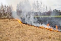 Notfall auf einem Gebiet, Feuer brennt trockenes Gras mit Tieren stockfoto