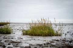 Noth Sea /German Ocean. Germany North Sea, low tide with gras and mud flat stock image