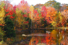 Nothern ontario fall color royalty free stock photography