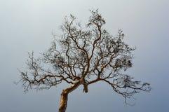 Nothing extra. Alone tree in park Monrepo, Vyborg Royalty Free Stock Photography