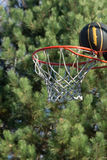 Nothing but Net - Basketball Action of the Ball. Black and yellow basketball rolling off of the basketball rim into the net.  Pine trees / evergreens in the Royalty Free Stock Image