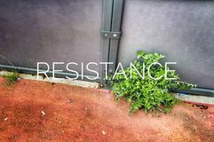 Resistance. Nothing resist to a powerfull plant Royalty Free Stock Photos