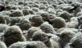 Nothing But Wool 10 stock photo