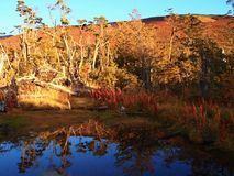 Autumn colors of the subpolar beech forests of Navarino island, Chile - the world's southernmost forests