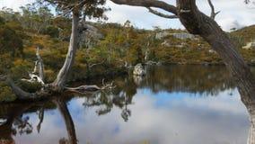 Nothofagus wordt weerspiegeld in de kalme wateren van de wombatpool stock videobeelden