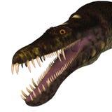 Nothosaurus Dinosaur Head Royalty Free Stock Photos