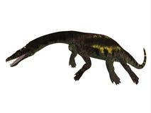 Nothosaurus Side Profile Royalty Free Stock Photos
