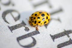 Noticias de la lectura del insecto Imagenes de archivo