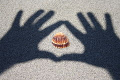 Notification of seashell Stock Image