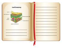 Notitieboekje en bladanatomie op pagina Royalty-vrije Stock Foto