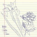 Notizbuch eingestellt mit Pfingstrose und einer Iris lizenzfreie abbildung