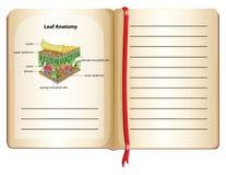 Notizbuch- und Blattanatomie auf Seite Lizenzfreies Stockfoto