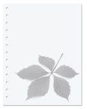 Notizbuchpapier mit Virginia-Kriechpflanzenblatt Lizenzfreies Stockbild