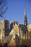 Notre Dame Cathedral. Paris in the golden dawn light stock photo