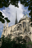 Notre Dame Cathedral through foliage Royalty Free Stock Image