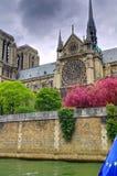 Notre Dame Cathedral med vårblom Royaltyfri Bild