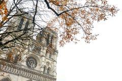 Notre Dame Cathedral, París, con el árbol del otoño Foto de archivo