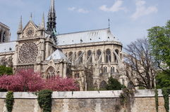 Notre Dame Cathedral in Paris. France from the side Stock Photography